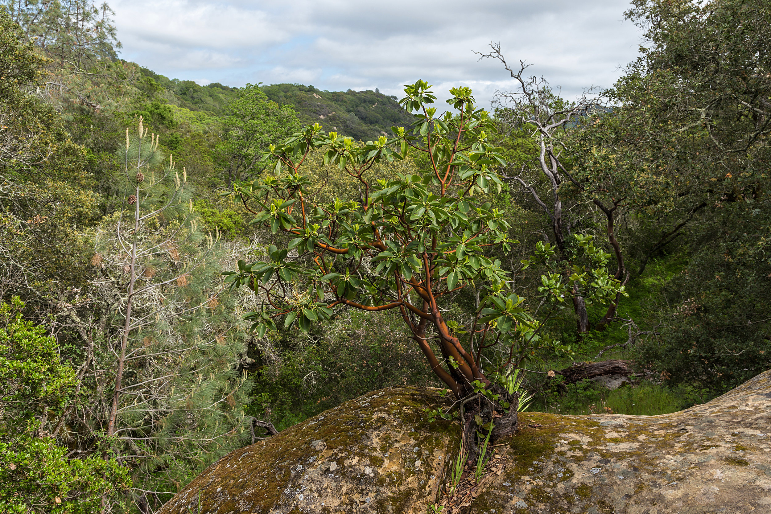 Madrone Canyon Trail.jpg