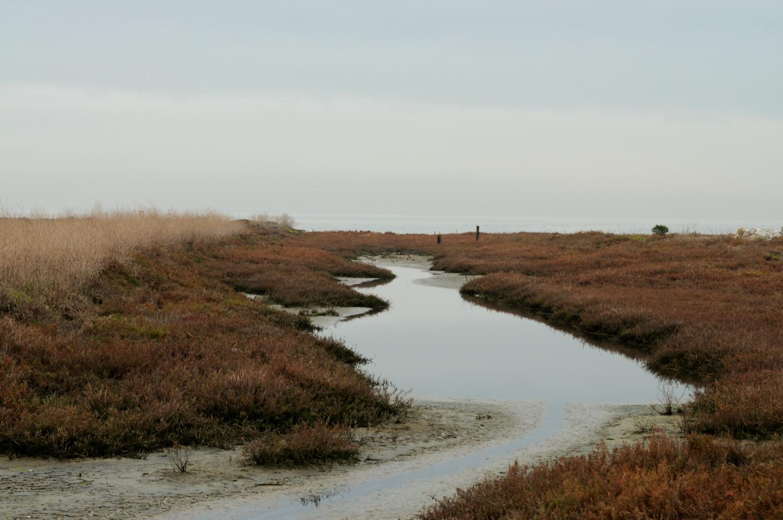 Hayward Cogswell Marsh-8.jpg