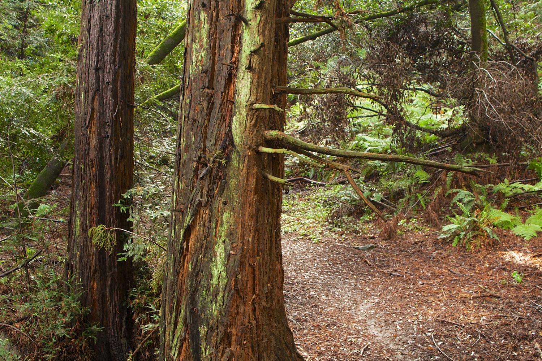 Redwood Regional Park-2.jpg