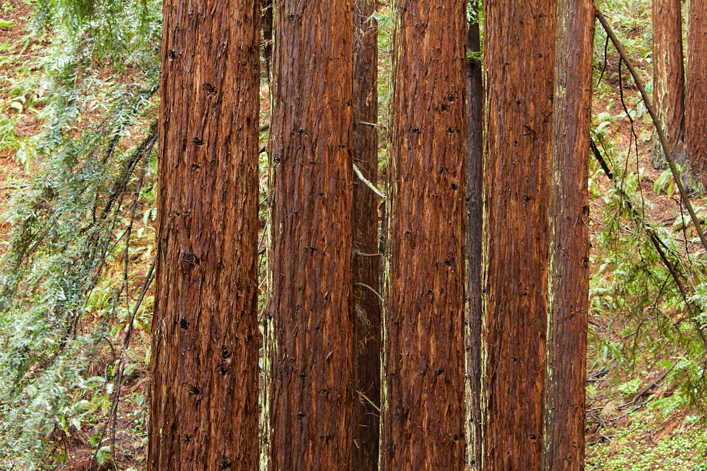 Redwood Regional Park-10.jpg