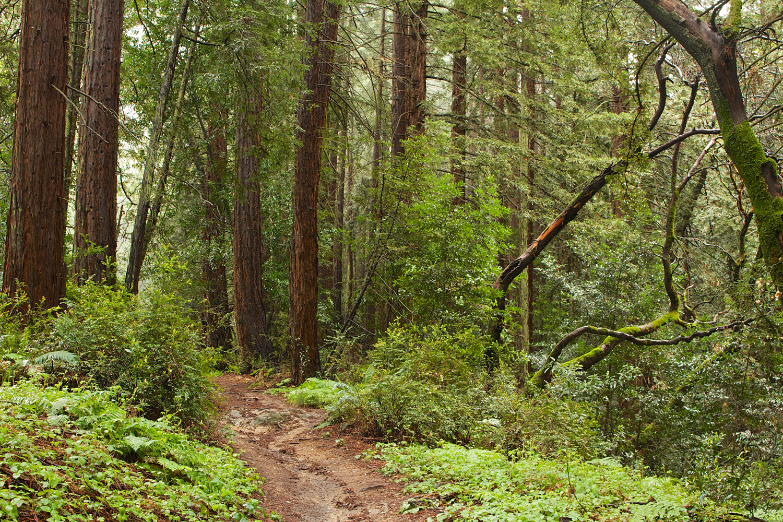 Redwood Regional Park-13.jpg