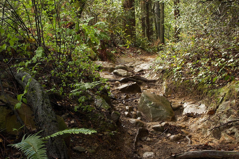 Redwood Regional Park-15.jpg
