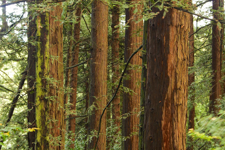 Redwood Regional Park-27.jpg