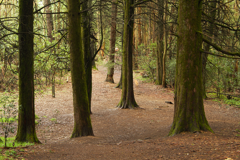 Redwood Regional Park-28.jpg