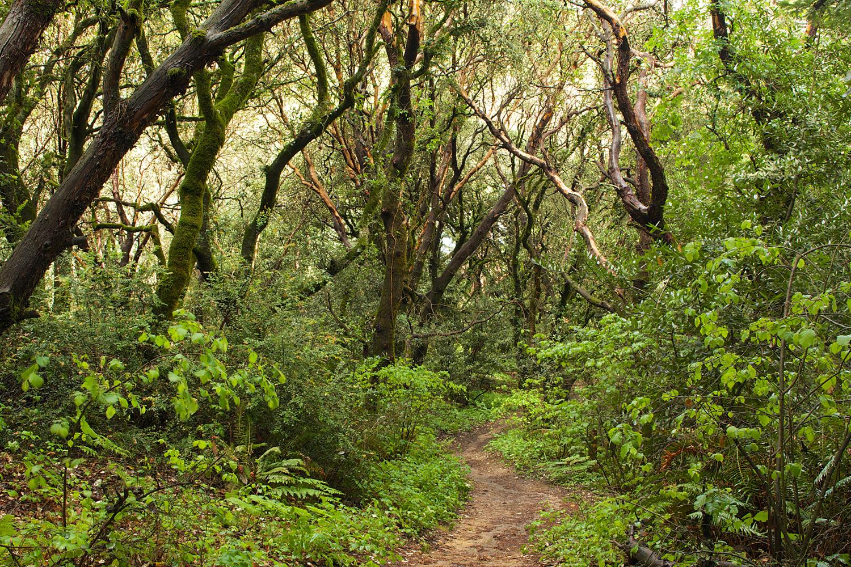 Redwood Regional Park-30.jpg