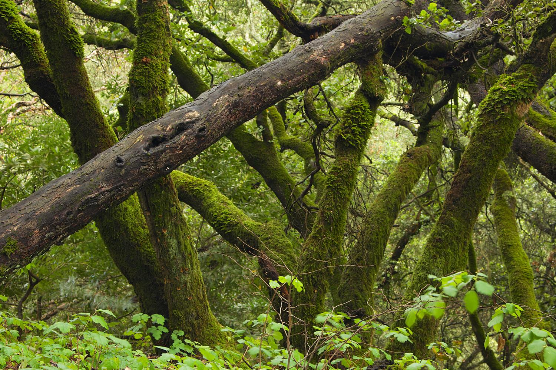 Redwood Regional Park-32.jpg