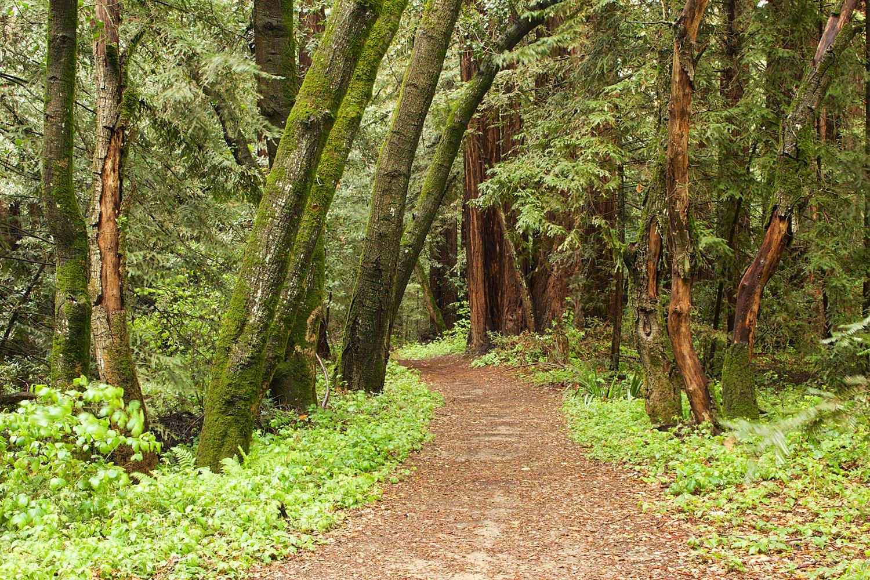 Redwood Regional Park-34.jpg