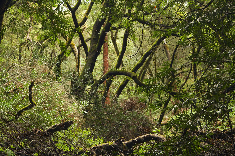 Redwood Regional Park-37.jpg