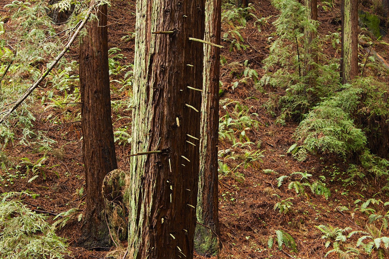 Redwood Regional Park-39.jpg
