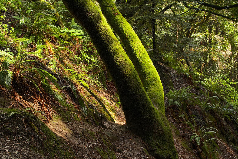 Redwood Regional Park.jpg