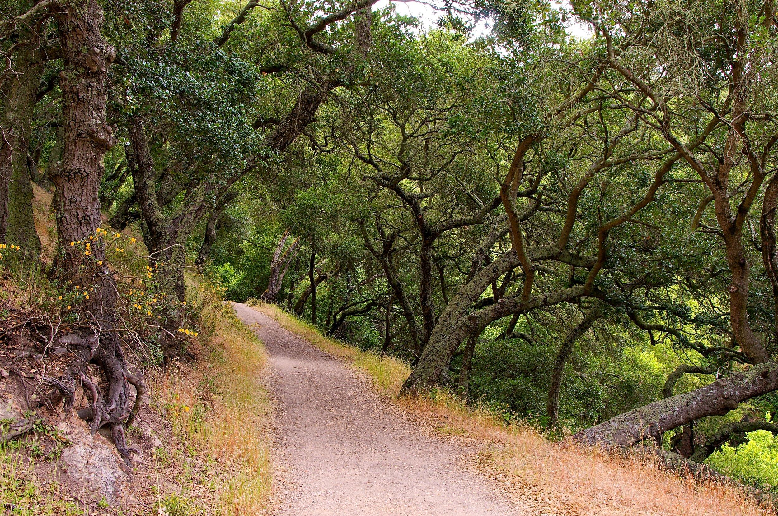 King's Canyon Loop - East Bay Mud