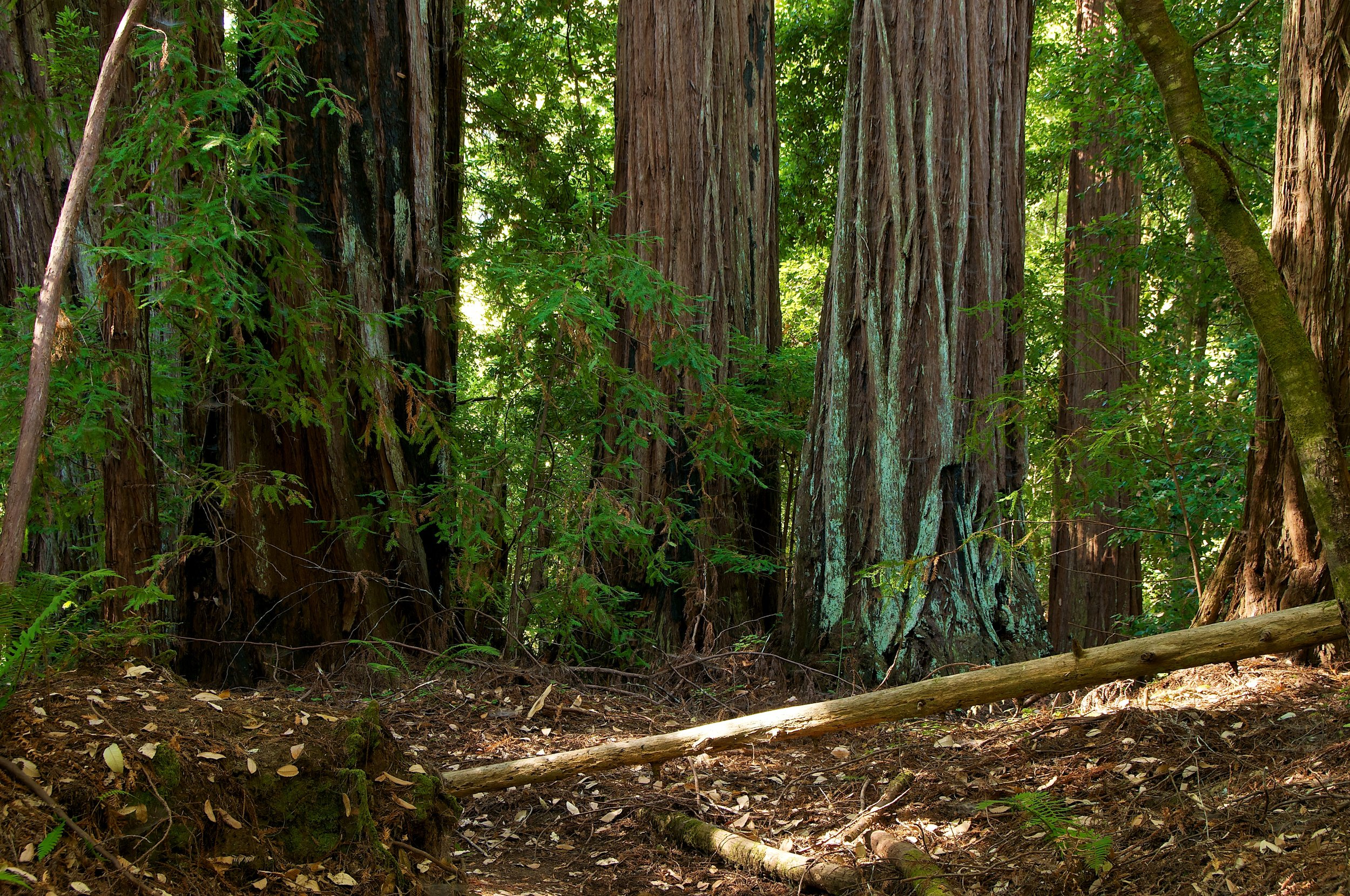 Portola Redwoods - State Park