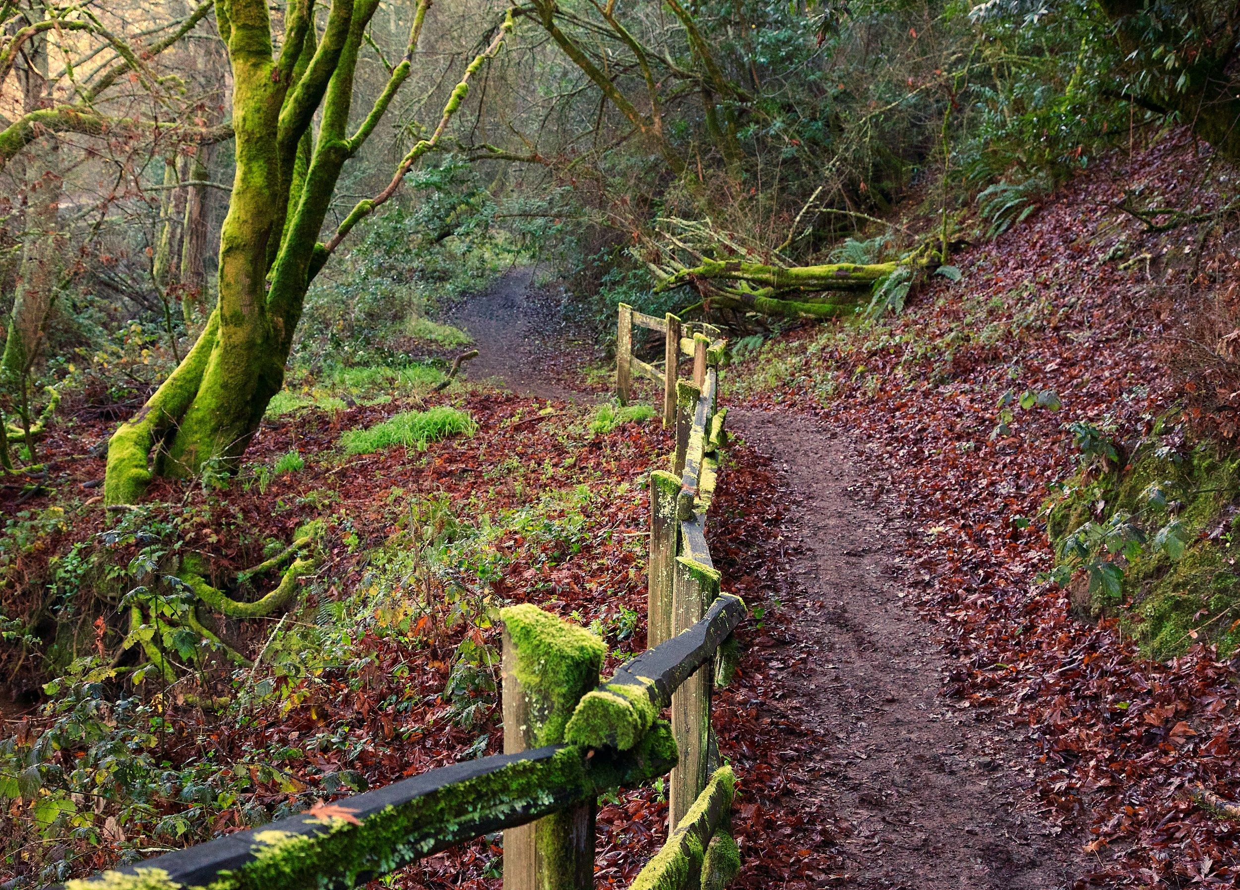 Bird and Big Bear - Redwood Regional Park