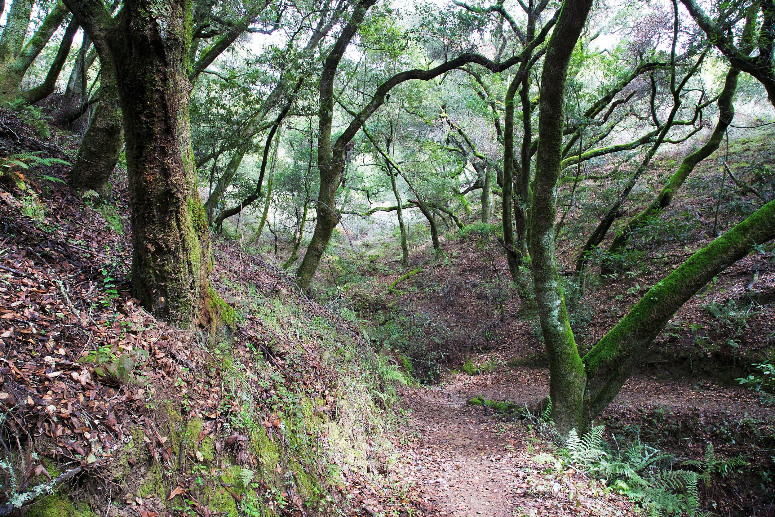 Golden Spike - Redwood Regional Park