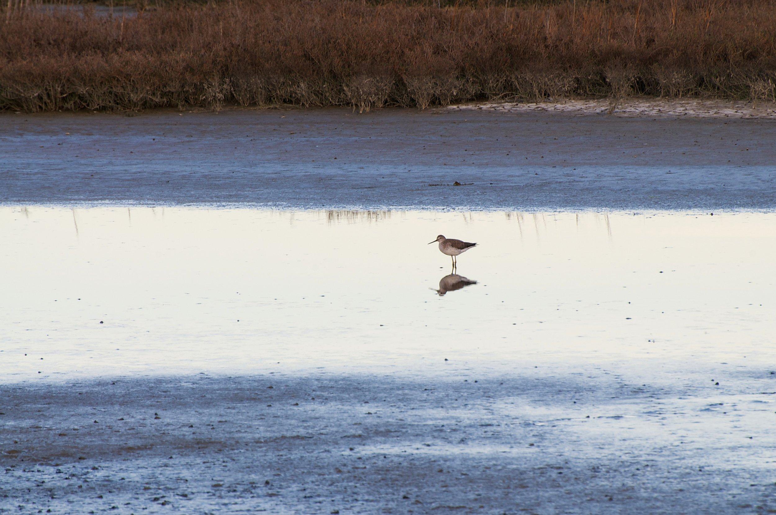 Afternoon Scenes - Don Edwards National Wildlife Refuge