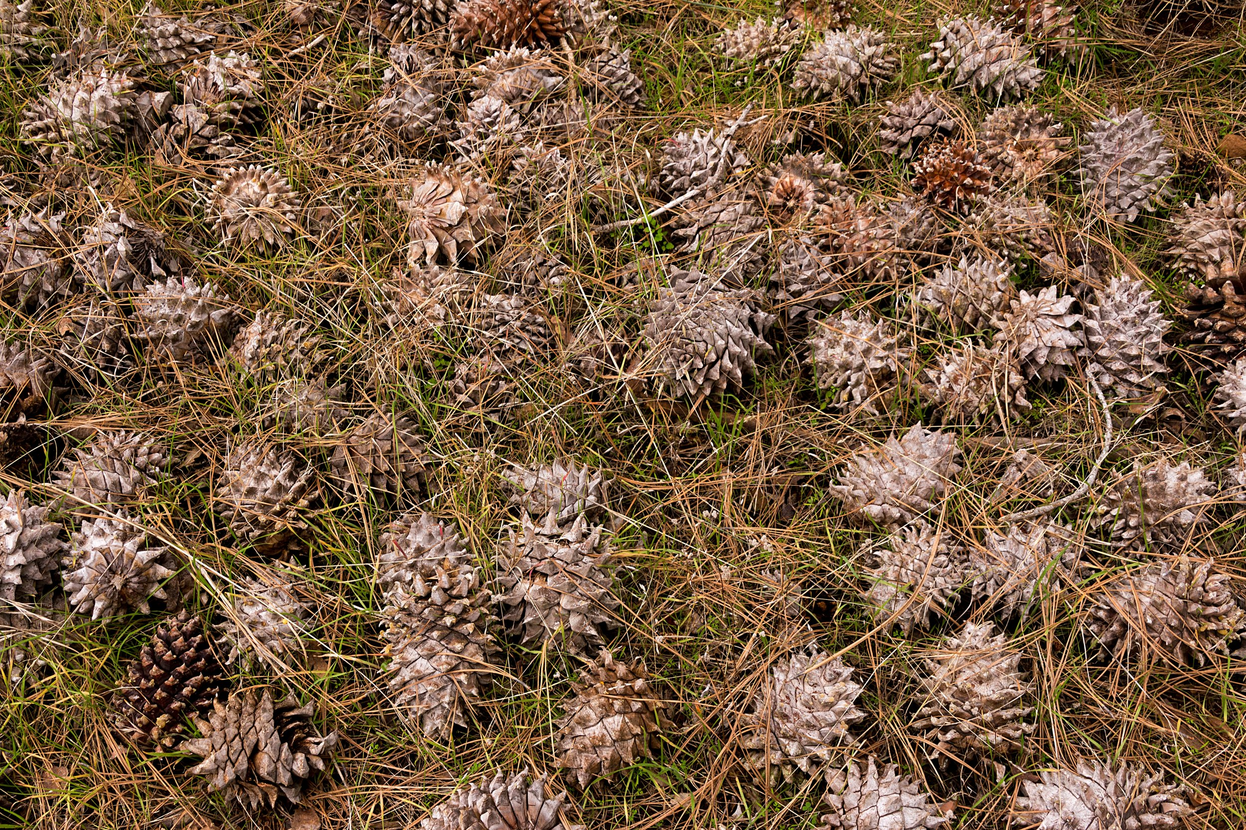 Olofson Ridge - Mount Diablo State Park