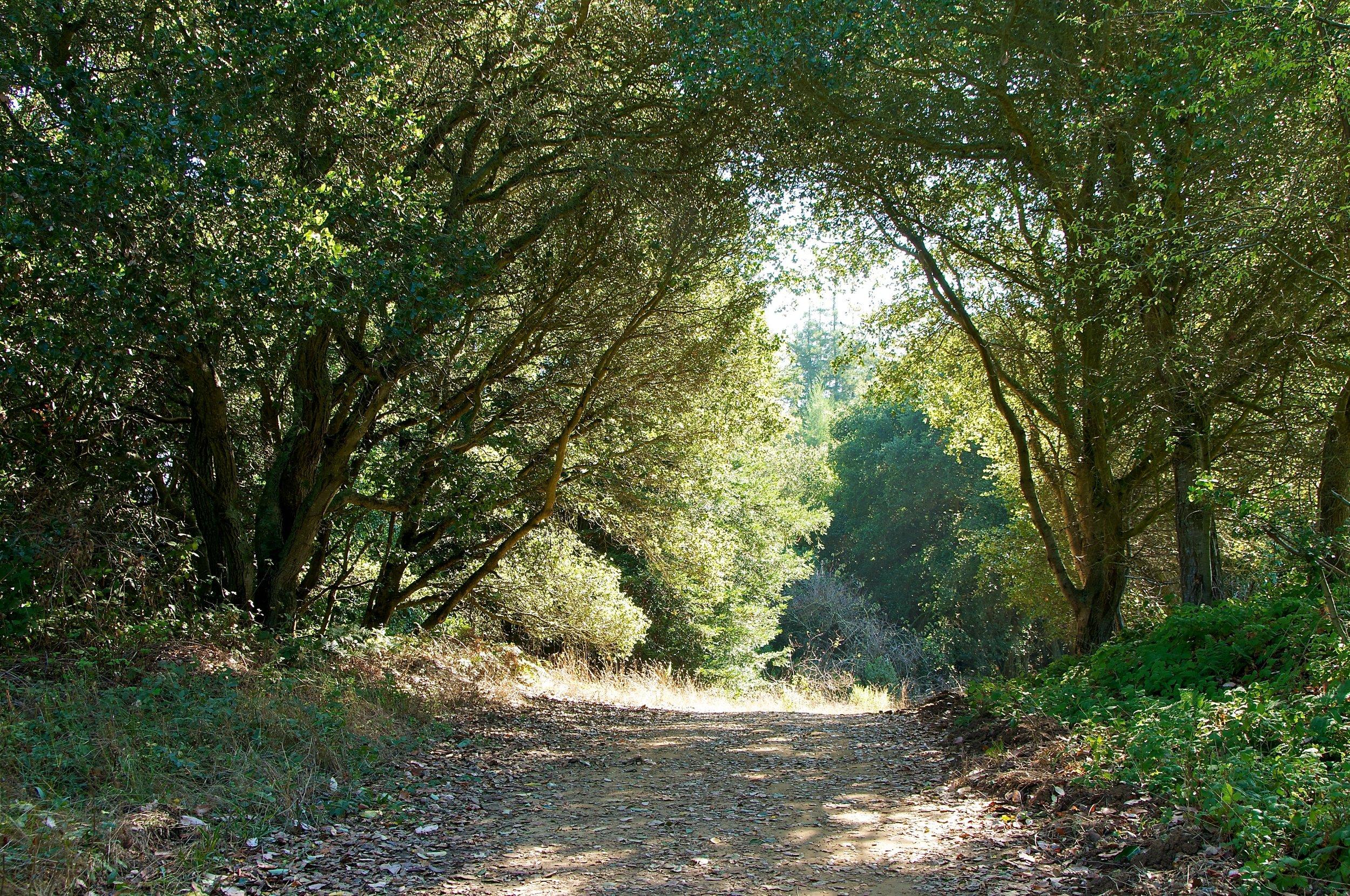 Hike to Brittle Leaf - Anthony Chabot Regional Park