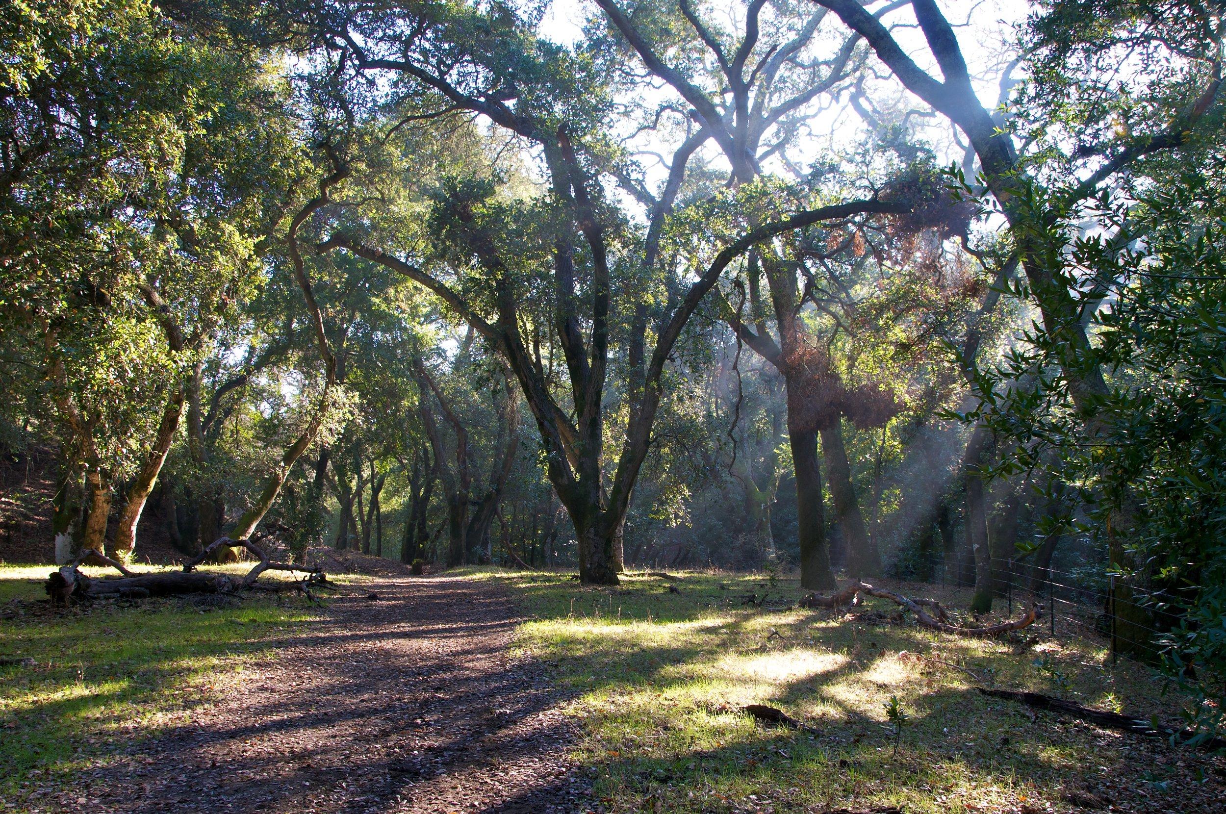Sunrise Loop Hike - Briones Regional Park