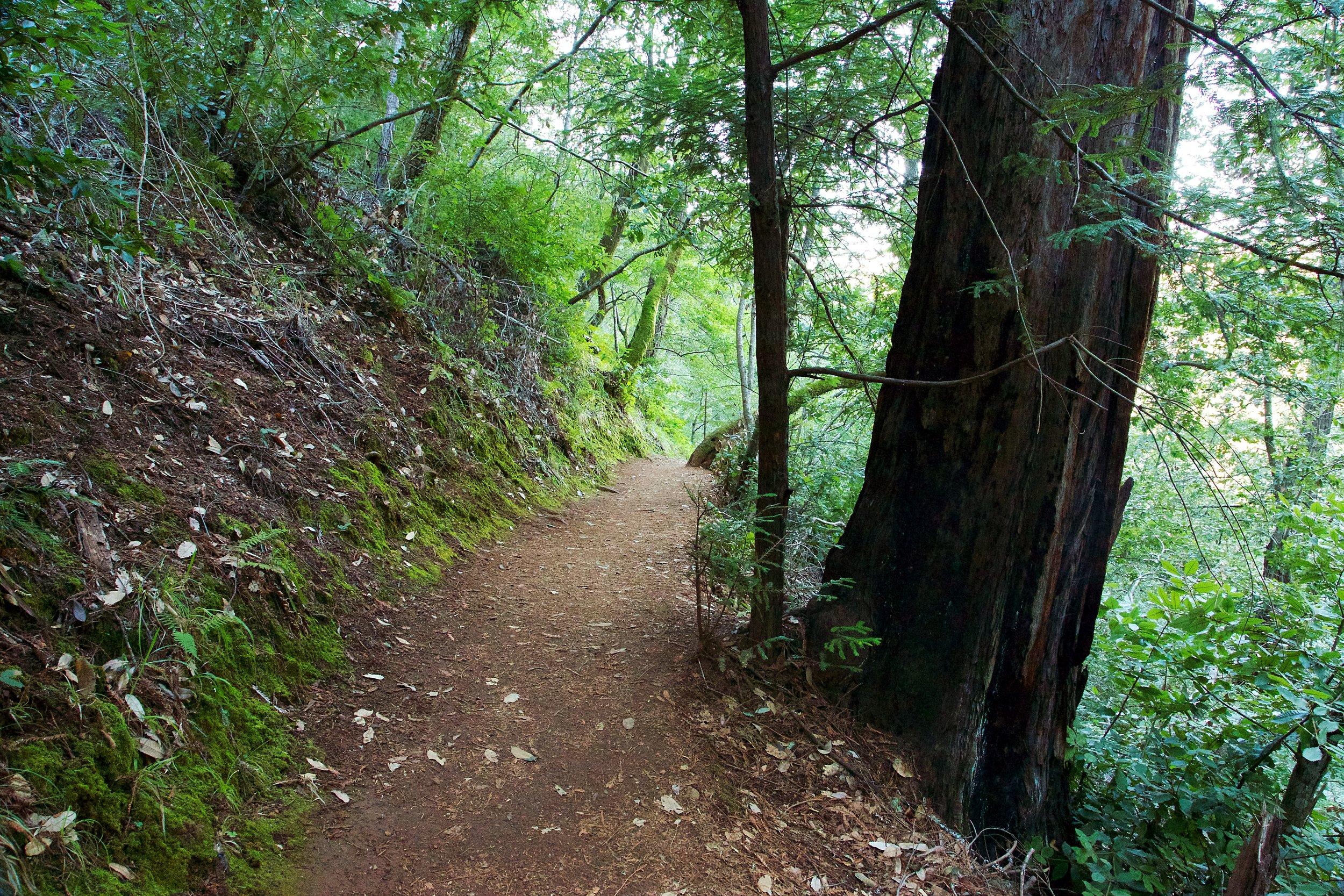 Hike to Hidden Lake - Marin Watershed