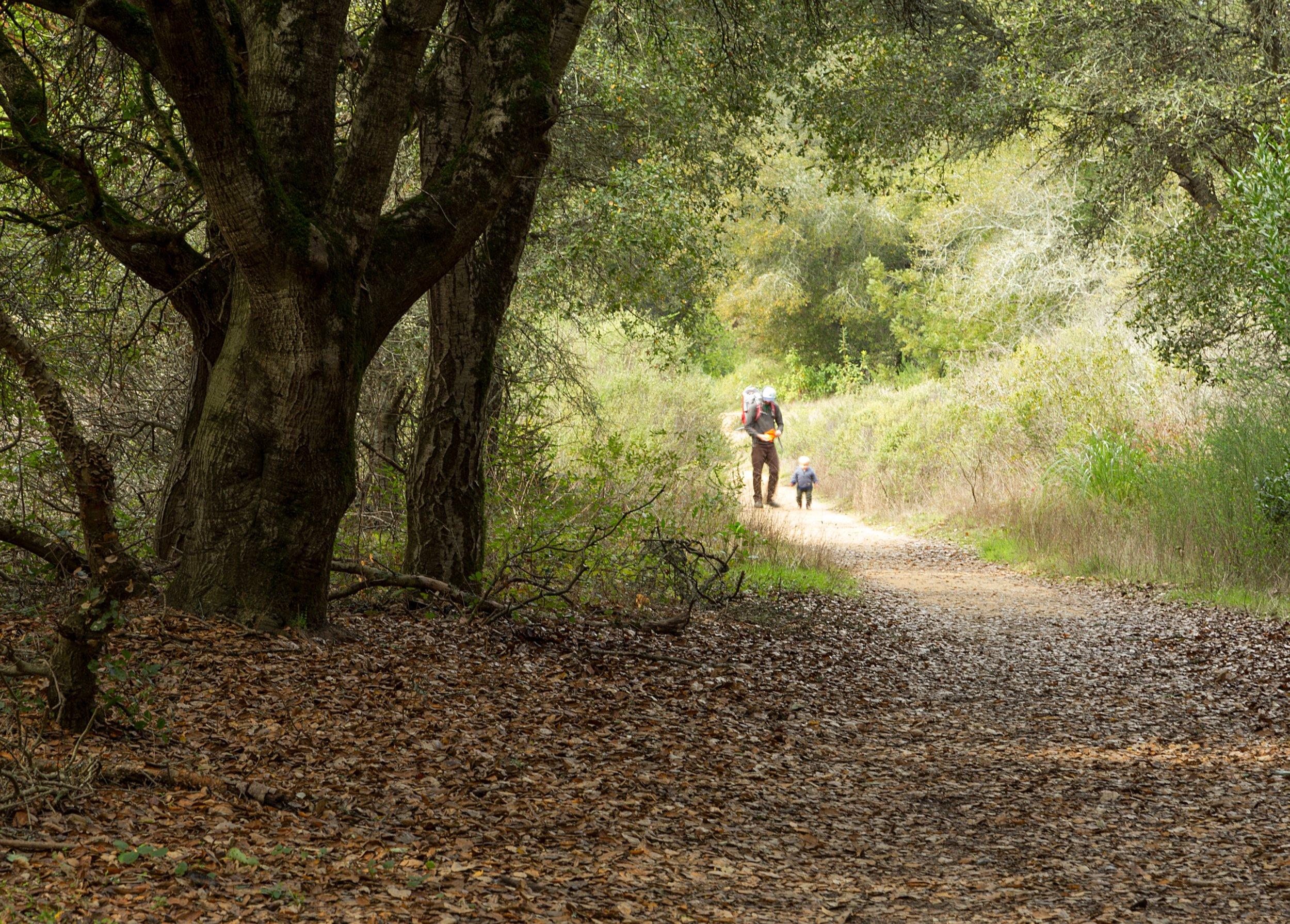Golden Spike Loop - Redwood Regional Park