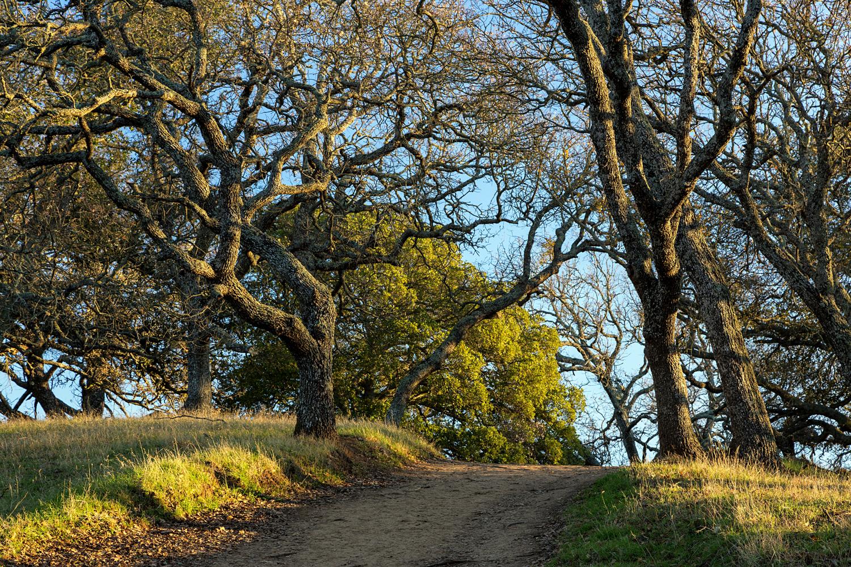 Briones Regional Park Diablo View-4.jpg