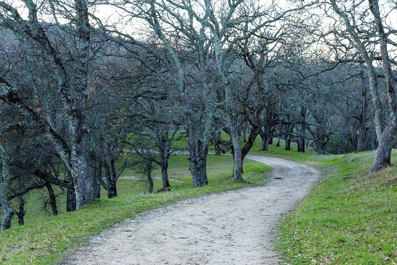 Briones Regional Park Diablo View-6.jpg