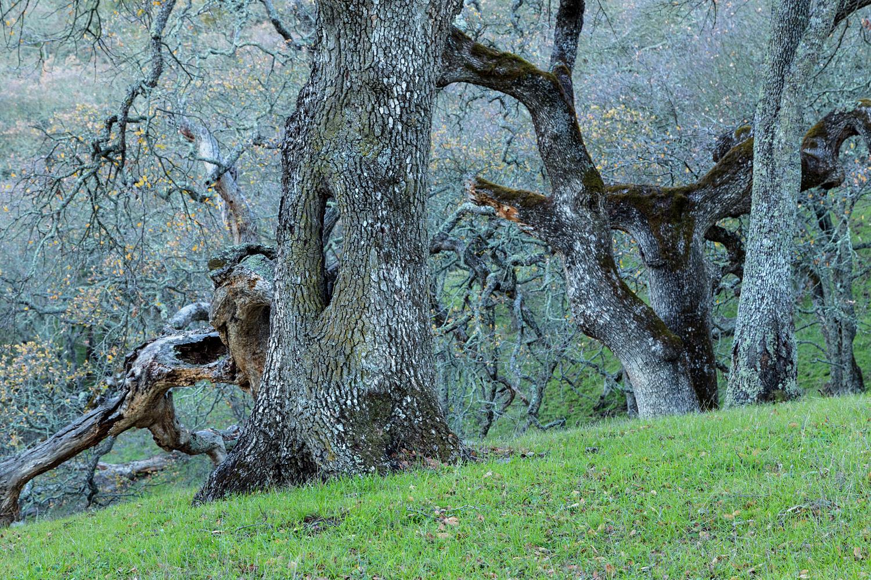 Briones Regional Park Diablo View-8.jpg