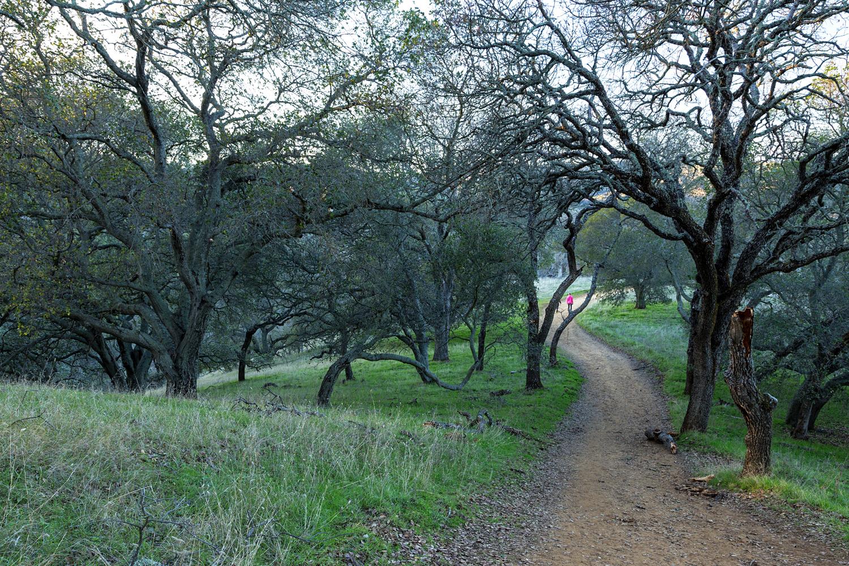 Diablo View Trail - Briones Regional Park