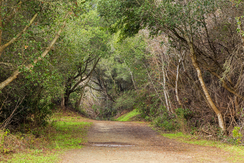 Wildcat Canyon Regional Park-7.jpg