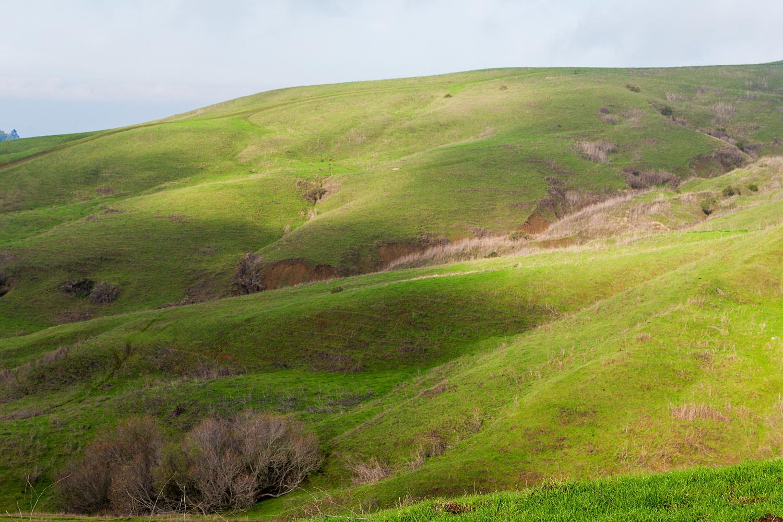 Wildcat Canyon Regional Park-11.jpg