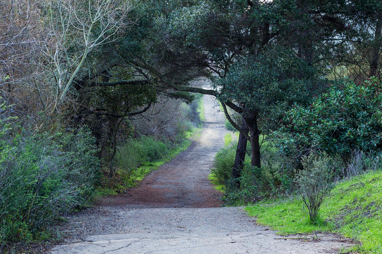 San Pablo Ridge Loop Hike - Wildcat Canyon Regional Park