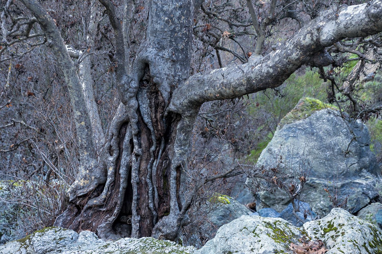 Little Yosemite Camp Ohlone Road-10.jpg