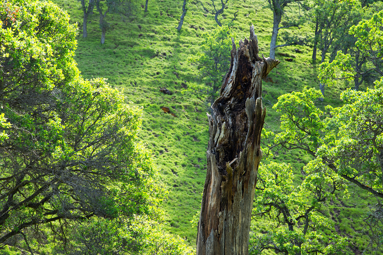 Round Valley Miwok Trail-3.jpg