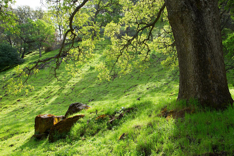 Round Valley Miwok Trail-2.jpg