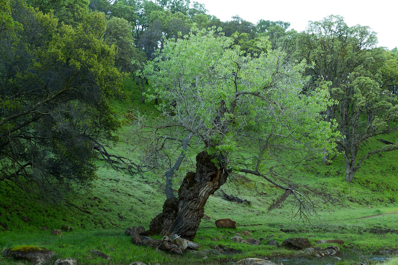 Round Valley Miwok Trail-6.jpg