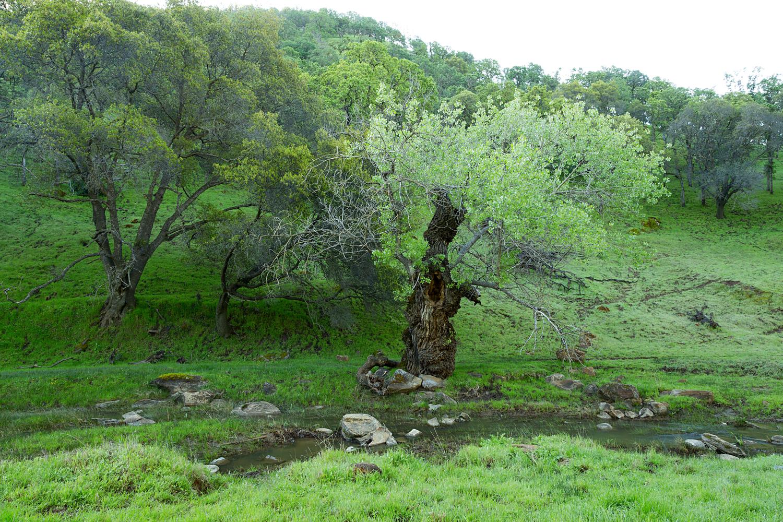 Round Valley Miwok Trail-7.jpg