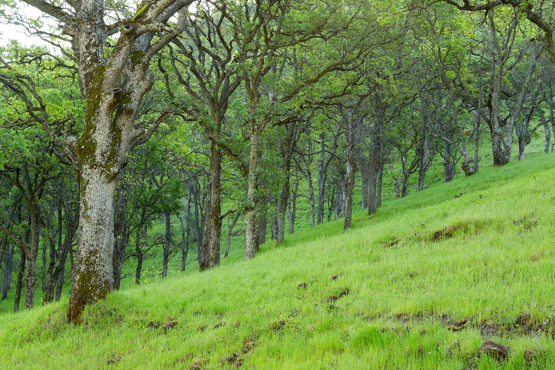 Round Valley Miwok Trail-8.jpg
