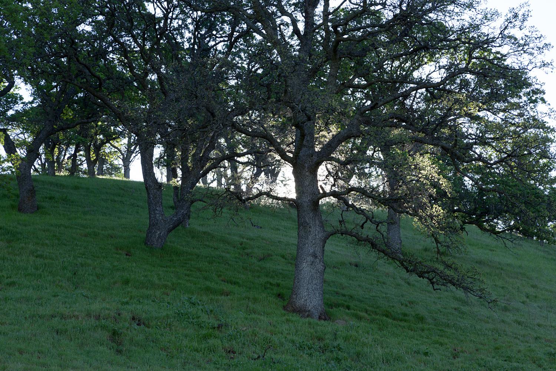 Round Valley Miwok Trail-10.jpg