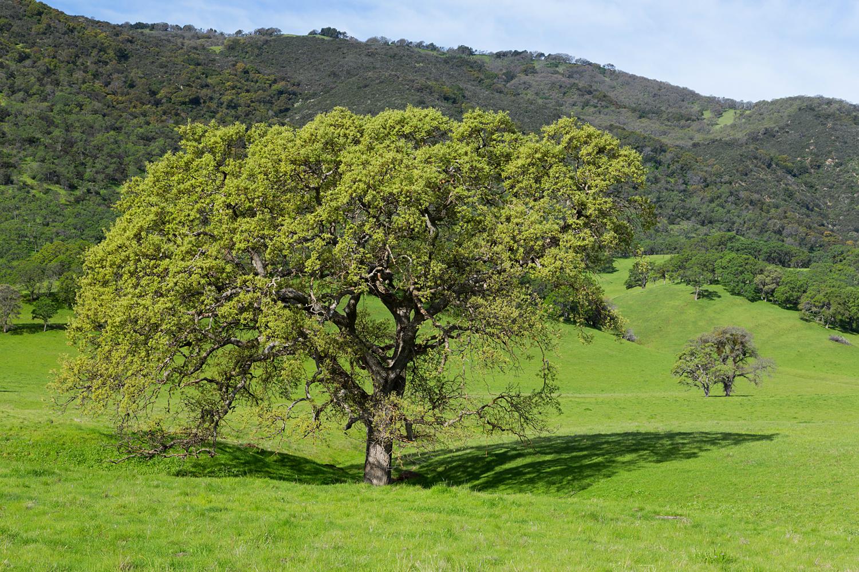 Round Valley Miwok Trail-13.jpg