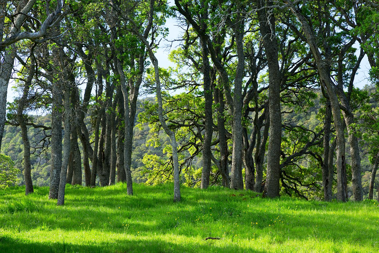 Round Valley Miwok Trail-15.jpg