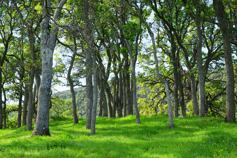 Round Valley Miwok Trail-16.jpg