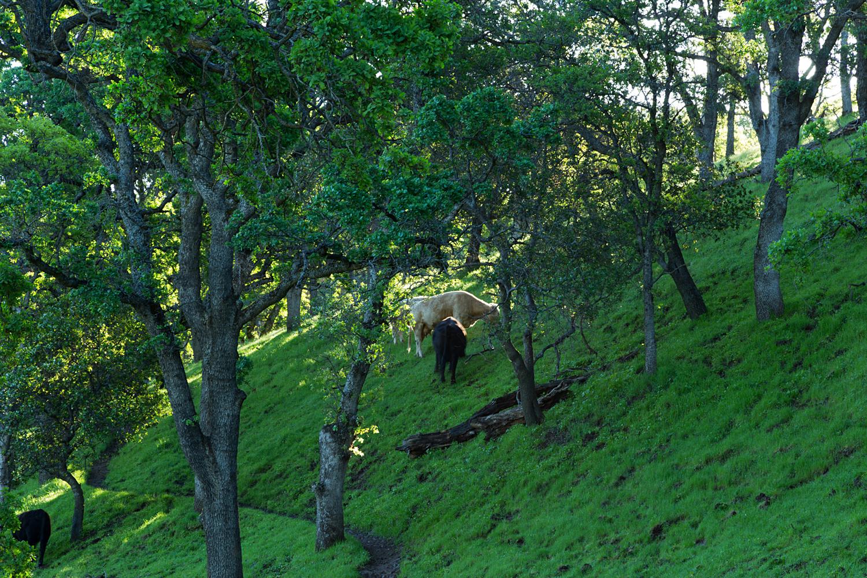 Round Valley Miwok Trail-17.jpg