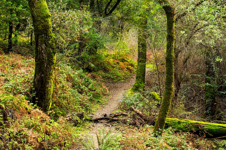 Redwood Regional Park Redwoods_-13.jpg