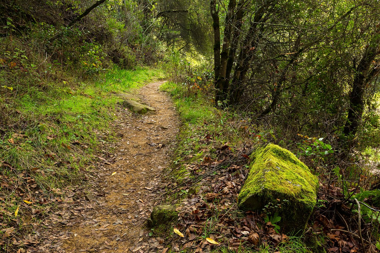 Redwood Regional Park Redwoods_-25.jpg