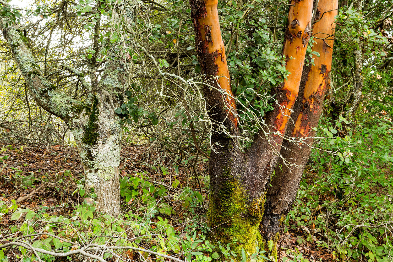 Redwood Regional Park Redwoods_-29.jpg