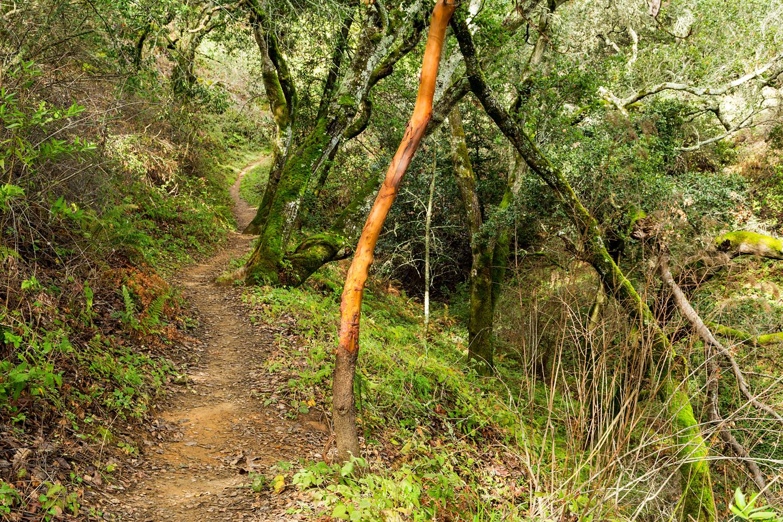 Golden Spike Trail