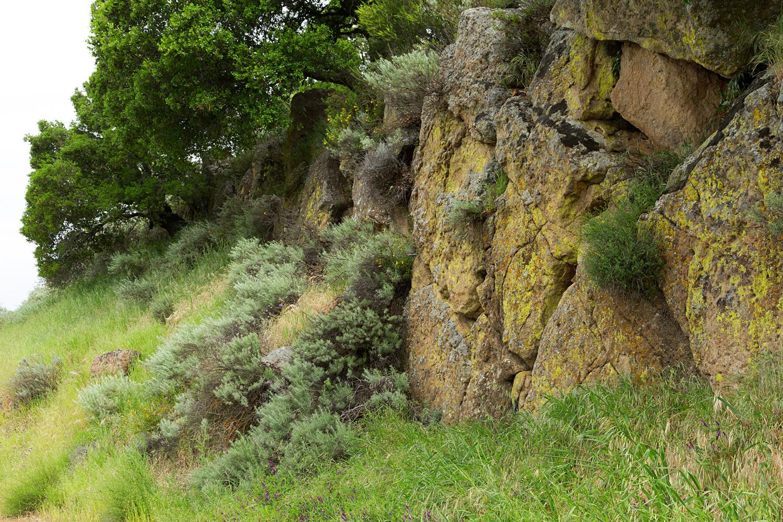 mount diablo state park pine canyon-3.jpg