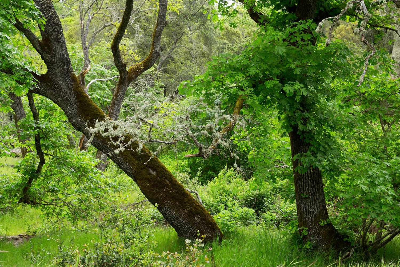 mount diablo state park pine canyon-10.jpg