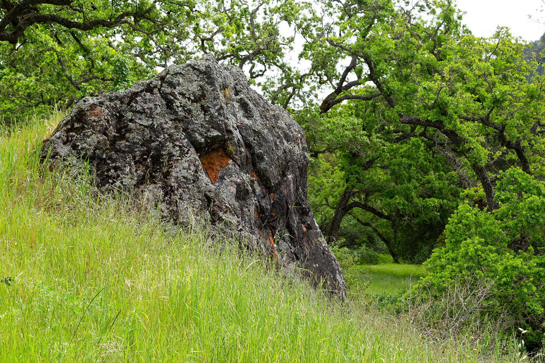 mount diablo state park pine canyon-11.jpg