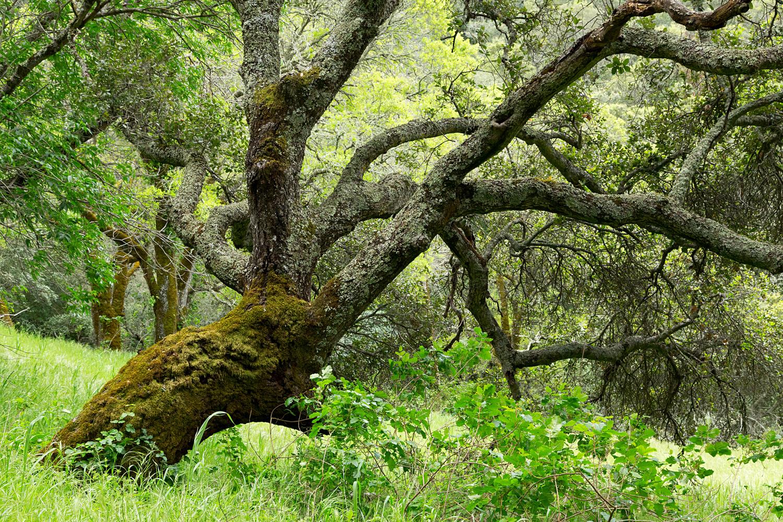 mount diablo state park pine canyon-16.jpg